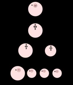 Proceso de maduración del óvulo